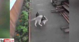 كلب صغير يعيد قطة مريضة إلى البيت